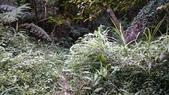頂湖~水車寮步道~水尾山~二子坪親山步道:DSC_0170.JPG