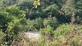 [台中市和平區] 唐麻丹山 裡冷部落線:DSC_1846.JPG