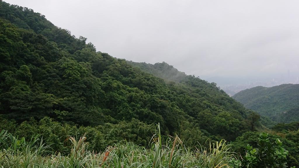 DSC_0371.JPG - 旅聯網十四周年版主登山活動