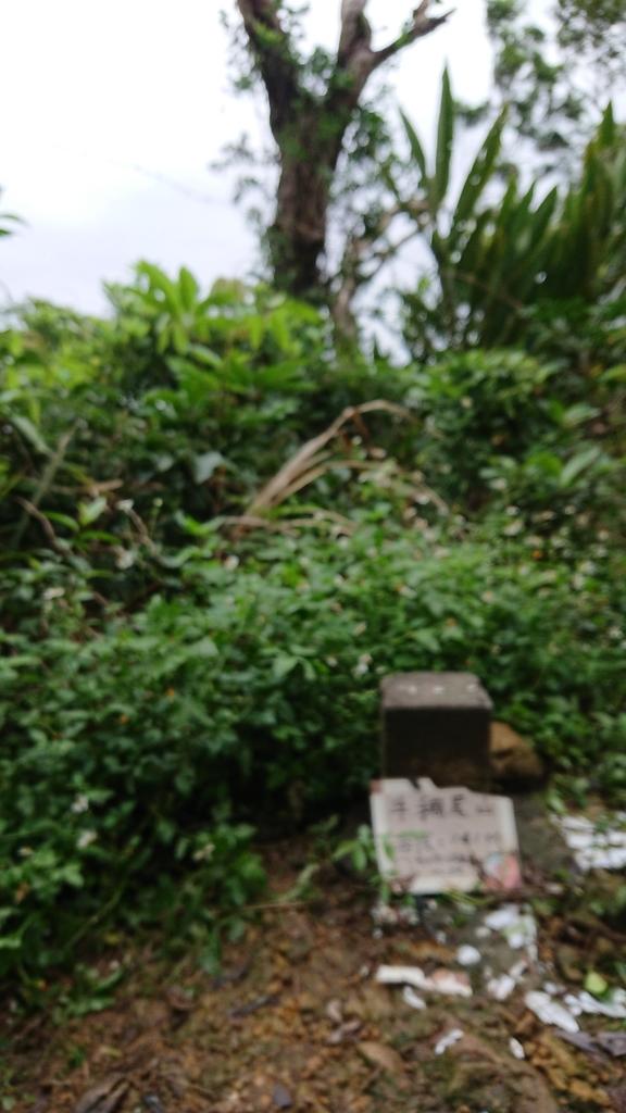 DSC_0475.JPG - 旅聯網十四周年版主登山活動