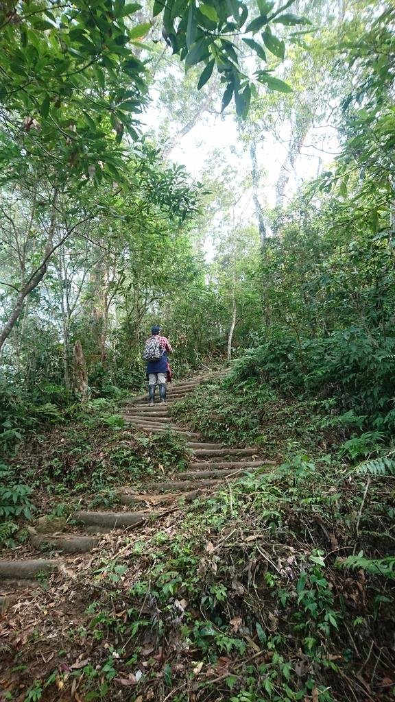 馬那邦山(錦雲山莊登山口):DSC_0493.JPG