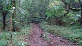七星山的泥土步道100.11.29.~101.1.3.下午:DSC03220.JPG