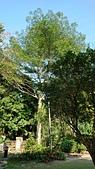 云饌休閒庭園:DSC_0101.JPG