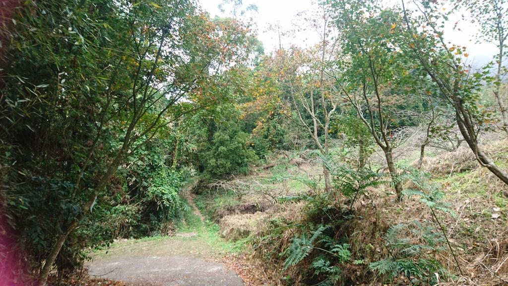 馬那邦山(錦雲山莊登山口):DSC_0396.JPG