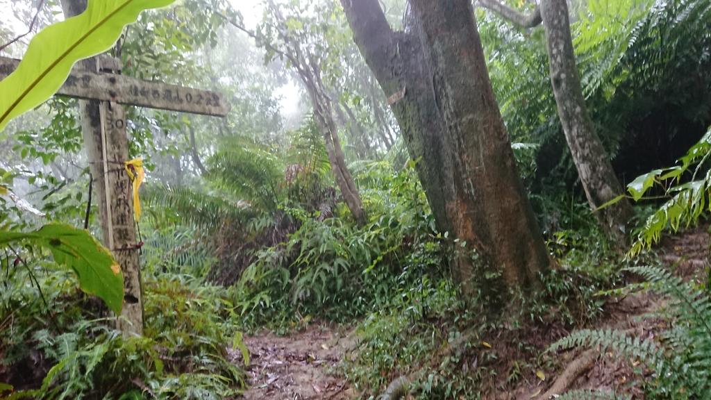 DSC_0415.JPG - 旅聯網十四周年版主登山活動