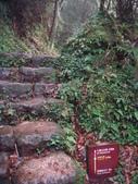 七星山的泥土步道100.11.29.~101.1.3.下午:DSC02065.JPG