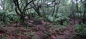 七星山的泥土步道100.11.29.~101.1.3.下午:DSC02002-03.JPG