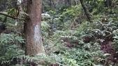 頂湖~水車寮步道~水尾山~二子坪親山步道:DSC_0175.JPG