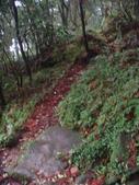 七星山的泥土步道100.11.29.~101.1.3.下午:DSC02069.JPG