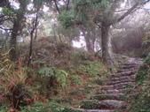 七星山的泥土步道100.11.29.~101.1.3.下午:DSC02071.JPG