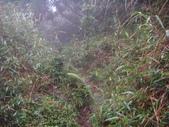 七星山的泥土步道100.11.29.~101.1.3.下午:DSC02074.JPG