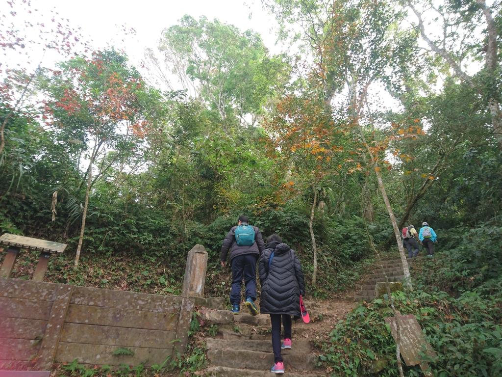 馬那邦山(錦雲山莊登山口):DSC_0478.JPG