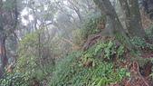 七星山的泥土步道100.11.29.~101.1.3.下午:DSC03232.JPG