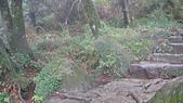 七星山的泥土步道100.11.29.~101.1.3.下午:DSC03233.JPG