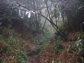 七星山的泥土步道100.11.29.~101.1.3.下午:DSC02078.JPG