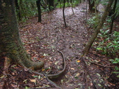 七星山的泥土步道100.11.29.~101.1.3.下午:DSC02013.JPG