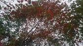 馬那邦山(錦雲山莊登山口):DSC_0444.JPG