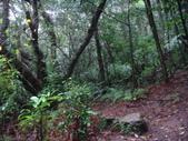 七星山的泥土步道100.11.29.~101.1.3.下午:DSC02016.JPG