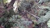 頂湖~水車寮步道~水尾山~二子坪親山步道:DSC_0227.JPG