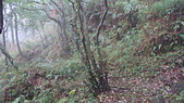 七星山的泥土步道100.11.29.~101.1.3.下午:DSC03236.JPG