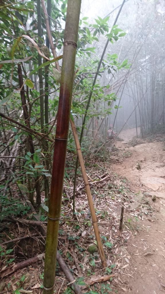 馬那邦山(錦雲山莊登山口):DSC_0685.JPG