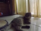 小貓Neko /Miruku:DSCF1309.JPG
