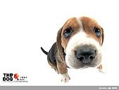 卡哇依可愛大頭狗:d-13_800