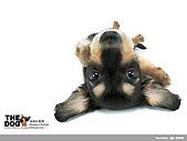 卡哇依可愛大頭狗:d-16_800