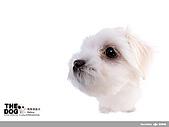 卡哇依可愛大頭狗:d-8_800