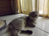 小貓Neko /Miruku:DSCF1311.JPG