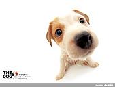 卡哇依可愛大頭狗:d-17_800