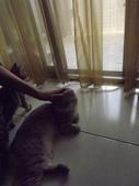 小貓Neko /Miruku:DSCF1317.JPG