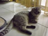 小貓Neko /Miruku:DSCF1307.JPG