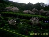 山水之景-金色淡水:PIC_0102.JPG