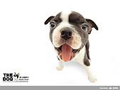 卡哇依可愛大頭狗:d-19_800