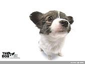 卡哇依可愛大頭狗:d-9_800