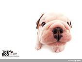 卡哇依可愛大頭狗:d-1_800