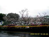 山水之景-金色淡水:PIC_0100.JPG
