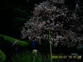 山水之景-金色淡水:PIC_0101.JPG