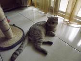 小貓Neko /Miruku:DSCF1316.JPG