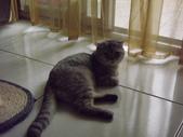 小貓Neko /Miruku:DSCF1306.JPG