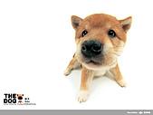 卡哇依可愛大頭狗:d-20_800