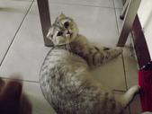 小貓Neko /Miruku:DSCF1297.JPG