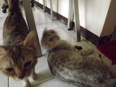 小貓Neko /Miruku:DSCF1296.JPG