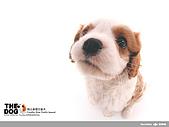 卡哇依可愛大頭狗:d-10_800