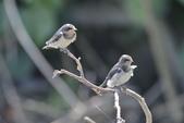生態:生態(鳥)_DSC50.JPG