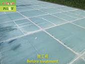 1204 溫室-屋頂-強化玻璃採光罩-清除水垢工程 - 相片:1204 溫室-屋頂-強化玻璃採光罩-清除水垢工程 (8).JPG