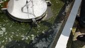 哈魚碼頭噴水池磁磚地面殘膠清除止滑施工-魚池青苔清除-木板走道污垢清除-魚市拍賣區地面污垢清除:12青苔清除-止滑大師-止滑劑防滑劑止滑防滑施工