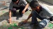 哈魚碼頭噴水池磁磚地面殘膠清除止滑施工-魚池青苔清除-木板走道污垢清除-魚市拍賣區地面污垢清除:5除膠測試-止滑大師-止滑劑防滑劑止滑防滑施工