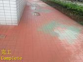 1503 Home Garden-Red Brick Floor Moss Cleaning Pro:1503 Home Garden-Red Brick Floor Moss Cleaning Project - Photo (29).jpg